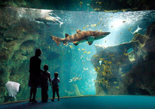 AquariumLaRochelle
